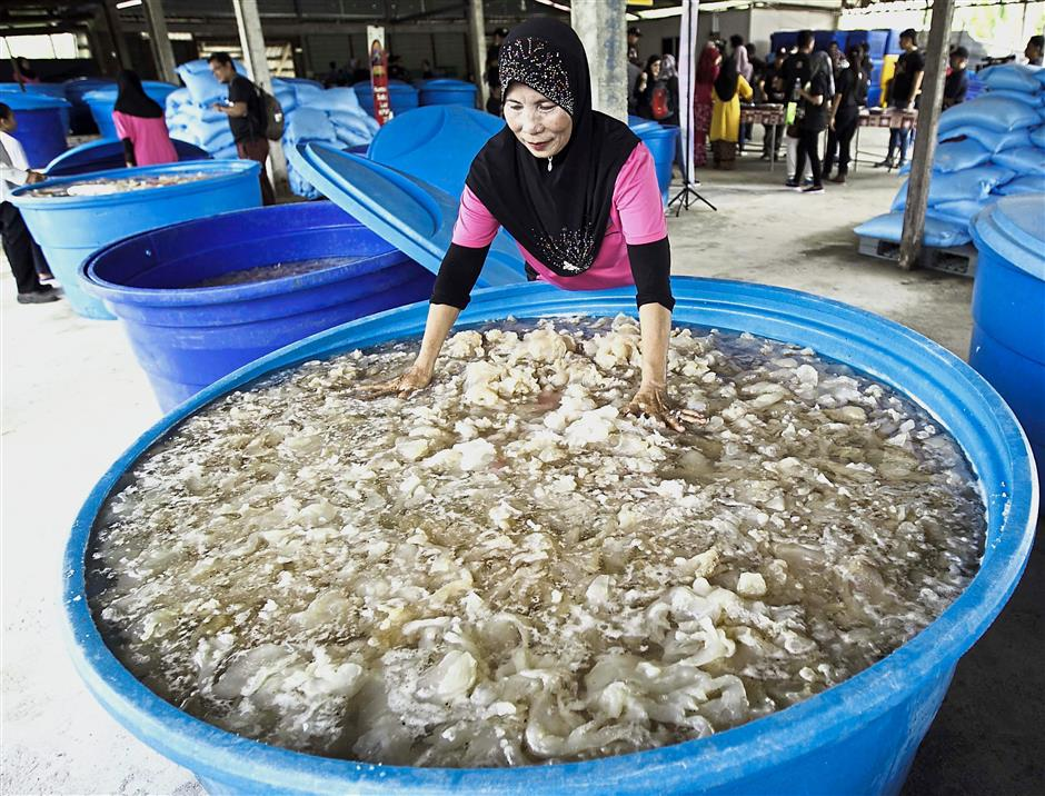 Up to 10 tonnes of jellyfish can be obtained in a month during the period from March to July.