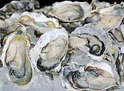 p2oysters