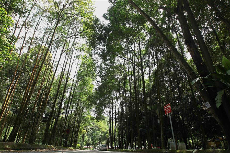 Taman Rimba Kiara in Taman Tun Dr Ismail is popular among residents who want it maintained for their enjoyment. — filepic