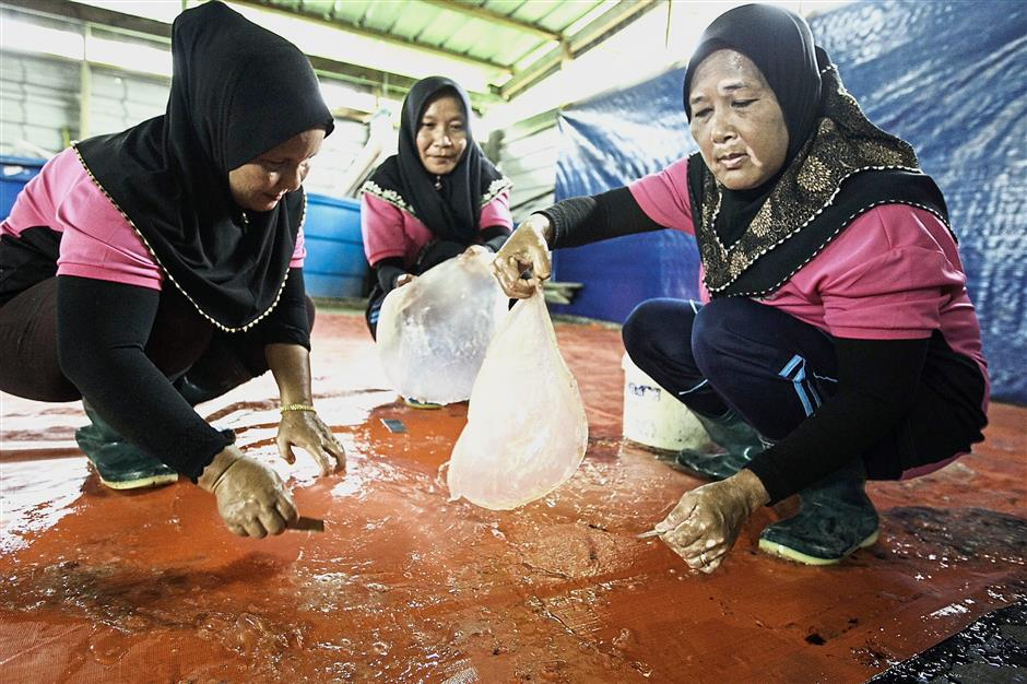 Workers cleaning the jellyfish before processing them. — Photos: ZULAZHAR SHEBLEE / THE STAR