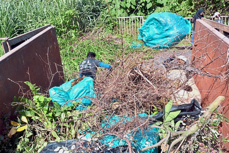 To combat dengue, constant clean-ups are needed as even leaves and roots can become Aedes breeding sites.