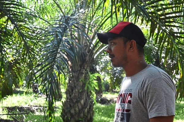 Abang Man has been struggling to cope with higher costs of fertiliser and pesticide.
