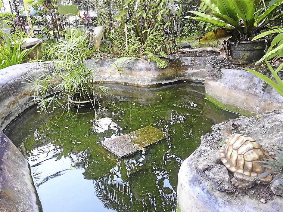 The pond in Zauyah's garden houses catfish and four tortoises.