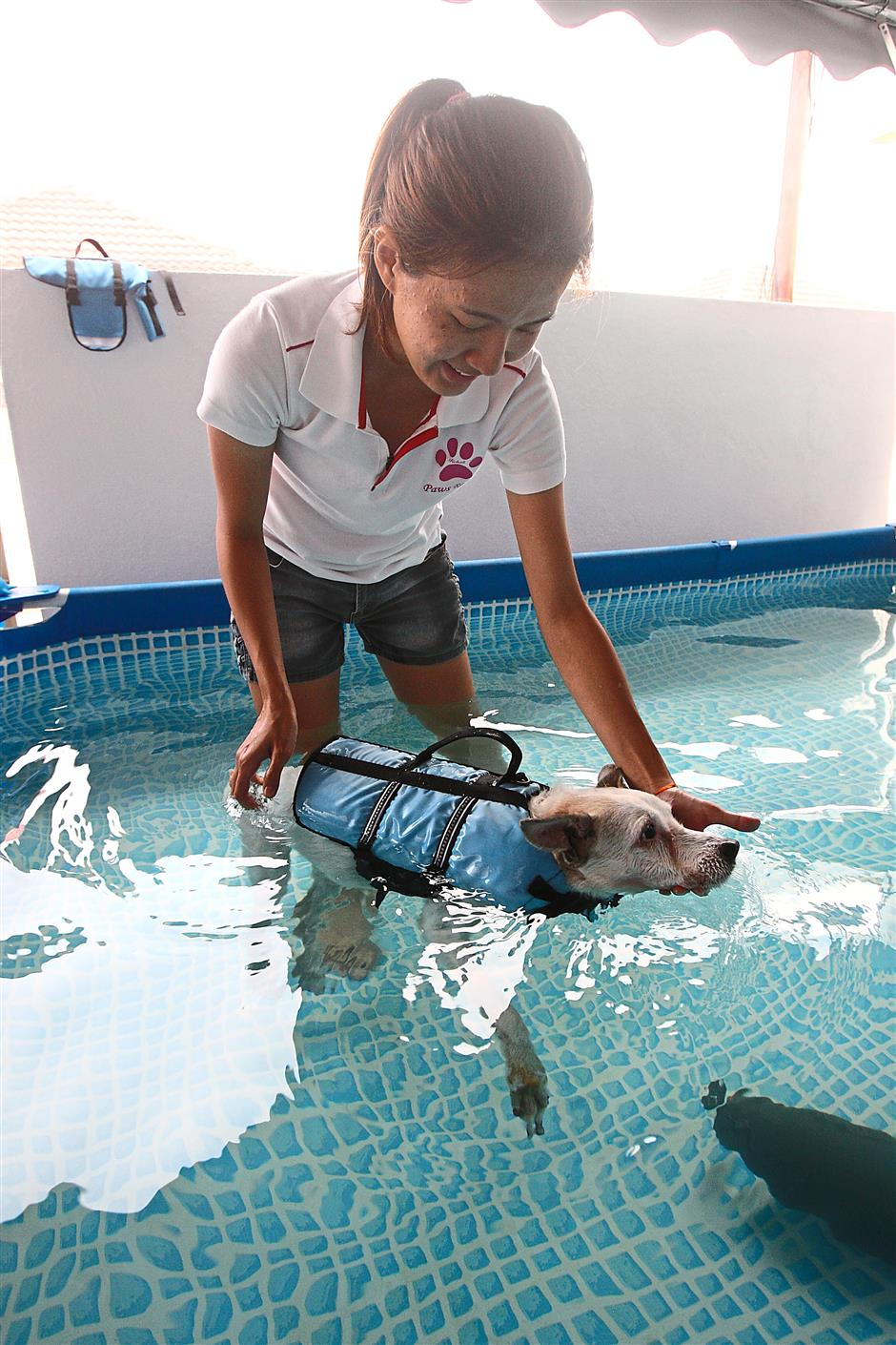 A 14-year-old dog with weak legs and limited mobility due to arthritis undergoing hydrotherapy at Paws Rehab Centre.PHOTOS BY RAYMOND OOI