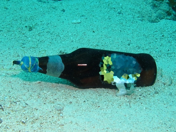 Not your usual beverage: An unexploded fish bomb on the sea floor. u2014 Photo courtesy of WWF Malaysia.