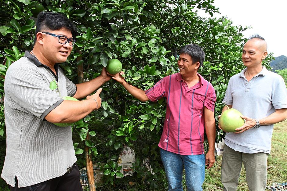 Good produce: Farmers proudly showing the pomelos they have grown. - filepic.
