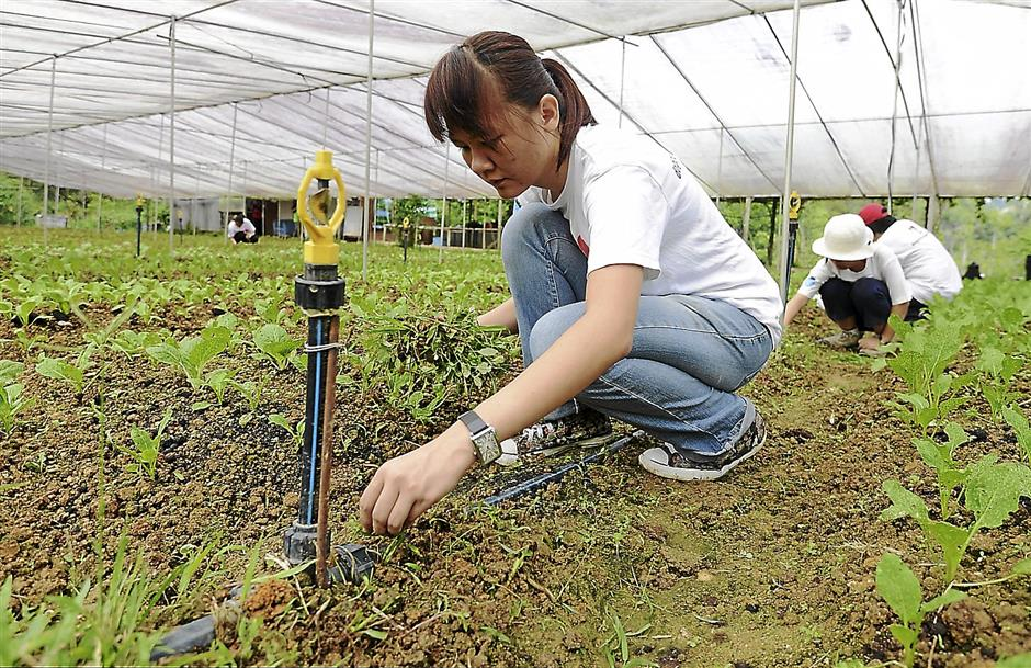 One of the volunteers pulling out the weeds at the vegetables row during the Good Day Out to Sum Sum Organic Farm in Janda Baik, Pahang on Oct 19.