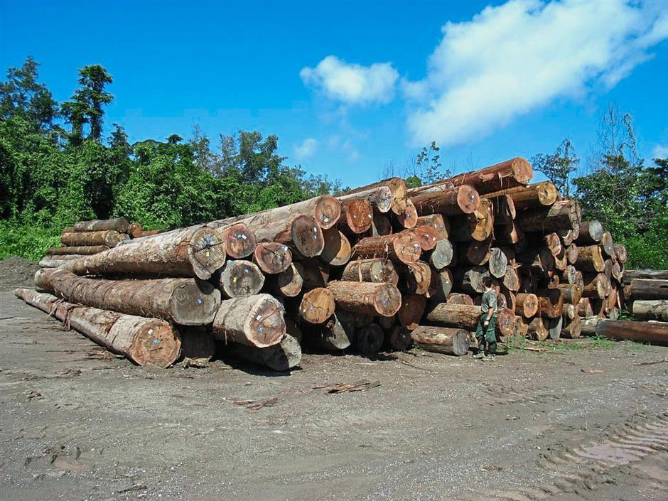 Ban on log export good for timber industry | The Star Online