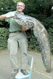 p9catfish