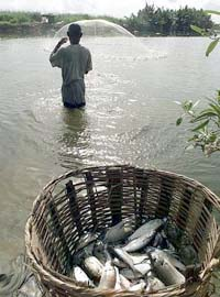 p5fisherman