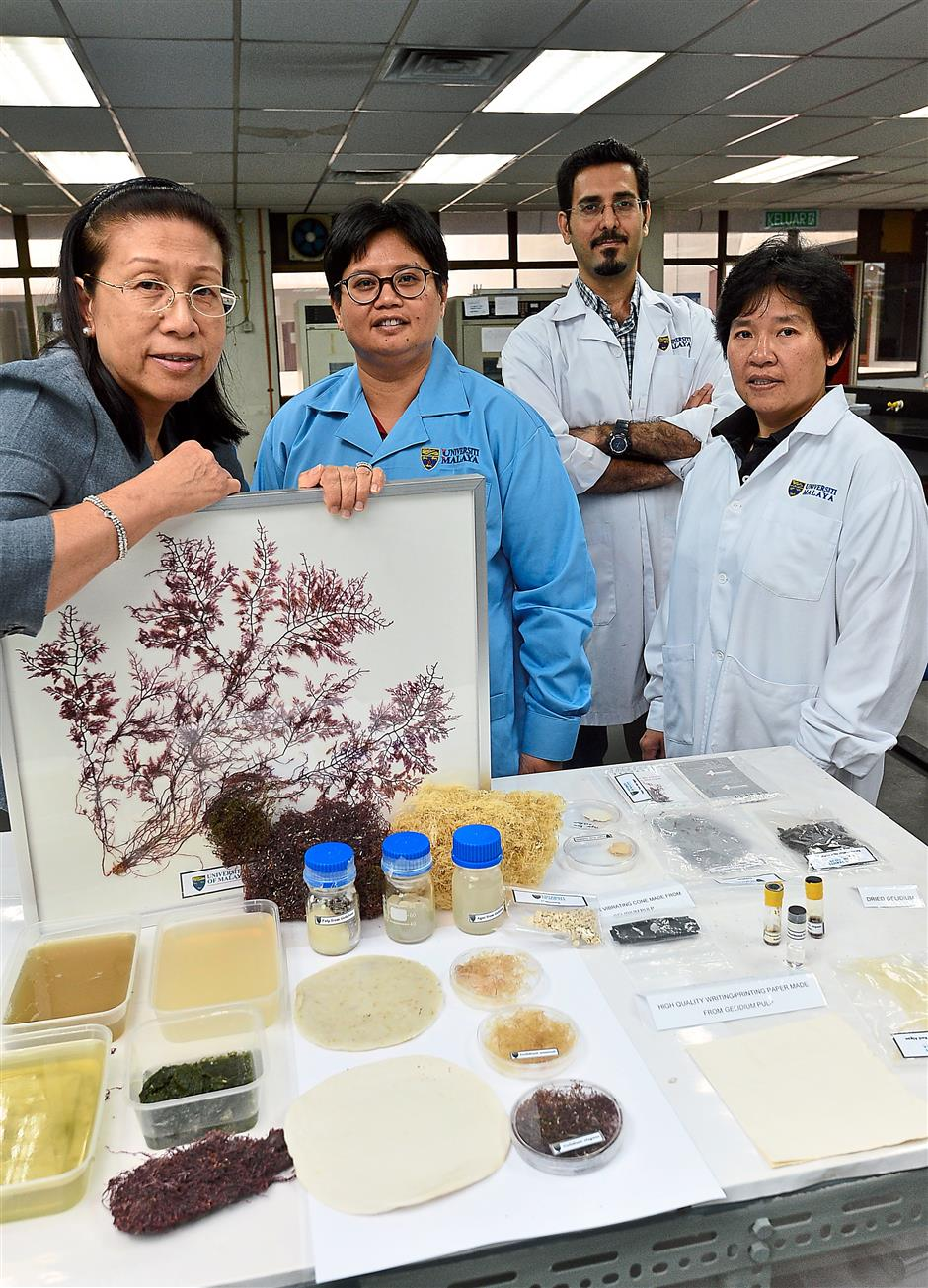 Studying seaweeds: Universiti Malaya's team that researched how red seaweed could be turned into pulp to make paper and bioethanol, (from left) Prof Dr Phang Siew Moi, Assoc Prof Lim Phaik Eem, PhD student Mohd J. Hessami and Dr Yeong Hui Yin. (Right) The different types of gelidium seaweed.