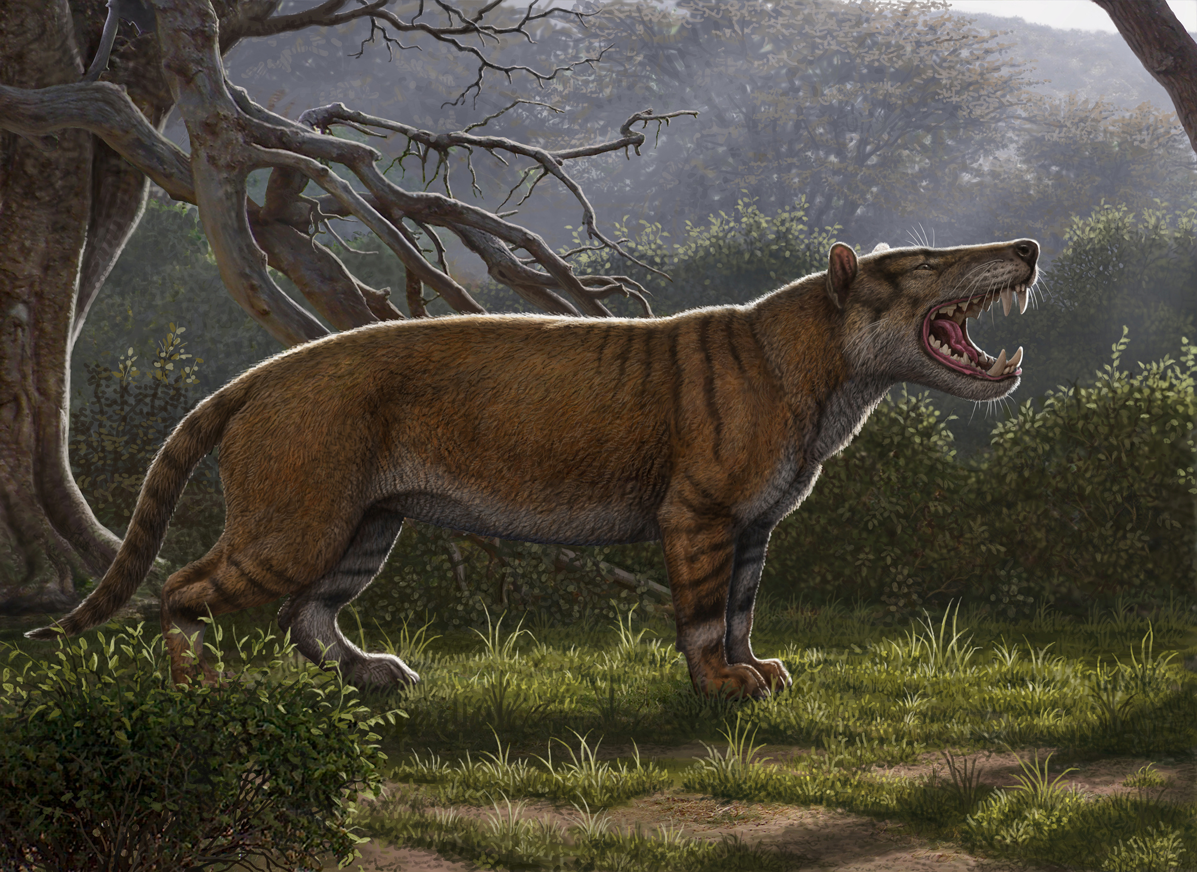Simbakubwa kutokaafrika, a gigantic mammalian carnivore that lived 22 million years ago in Africa and was larger than a polar bear, is seen in this artist's illustration released in Athens, Ohio, U.S., on April 18, 2019.   Courtesy Mauricio Anton/Handout via REUTERS