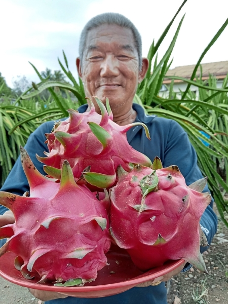 Dragon fruit farmers like Vincent Tan say only in Sepang can visitors find the sweetest tree-ripened fruits. (Right) Anglers can rent boats to fish in Sungai Sepang.
