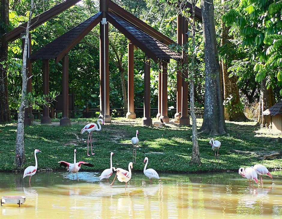 Pink is in: The park is also home to a flock of Greater flamingos.