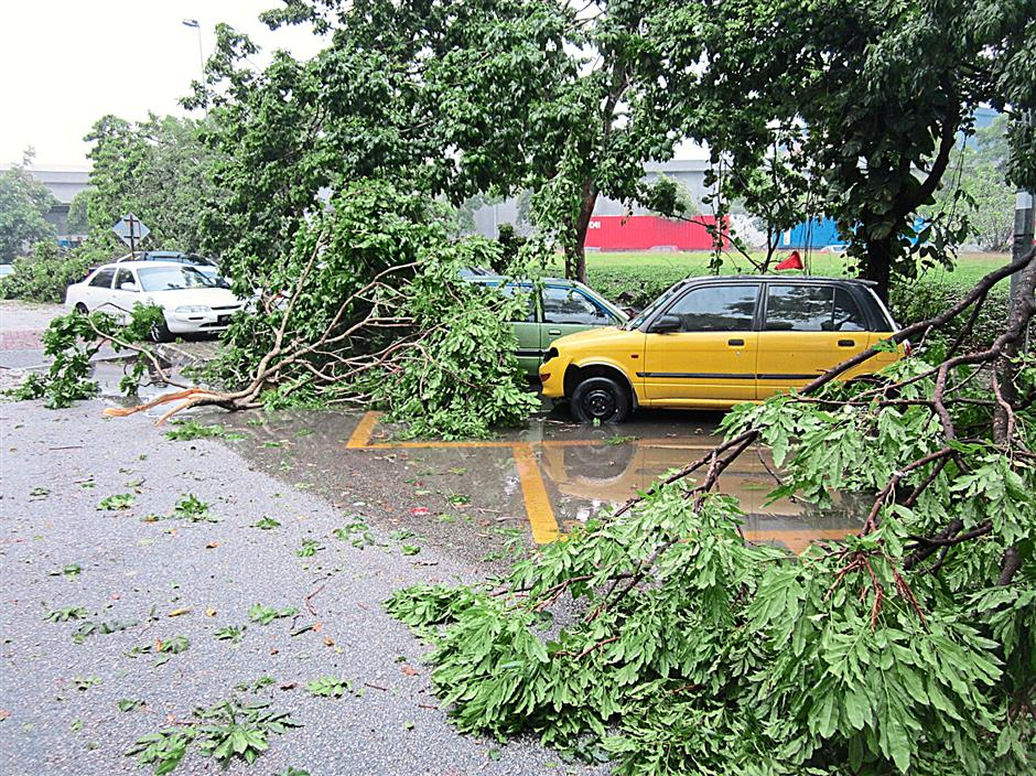 Cars parked at Jalan Astaka M U8/M parking lots at Bukit Jelutong Business and Technology Centre has a trees and branches fallen on it after the thunderstorm yesterday.