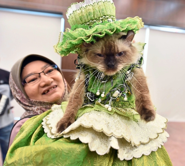 A cat fashion show was also held at the Hari Raya do.