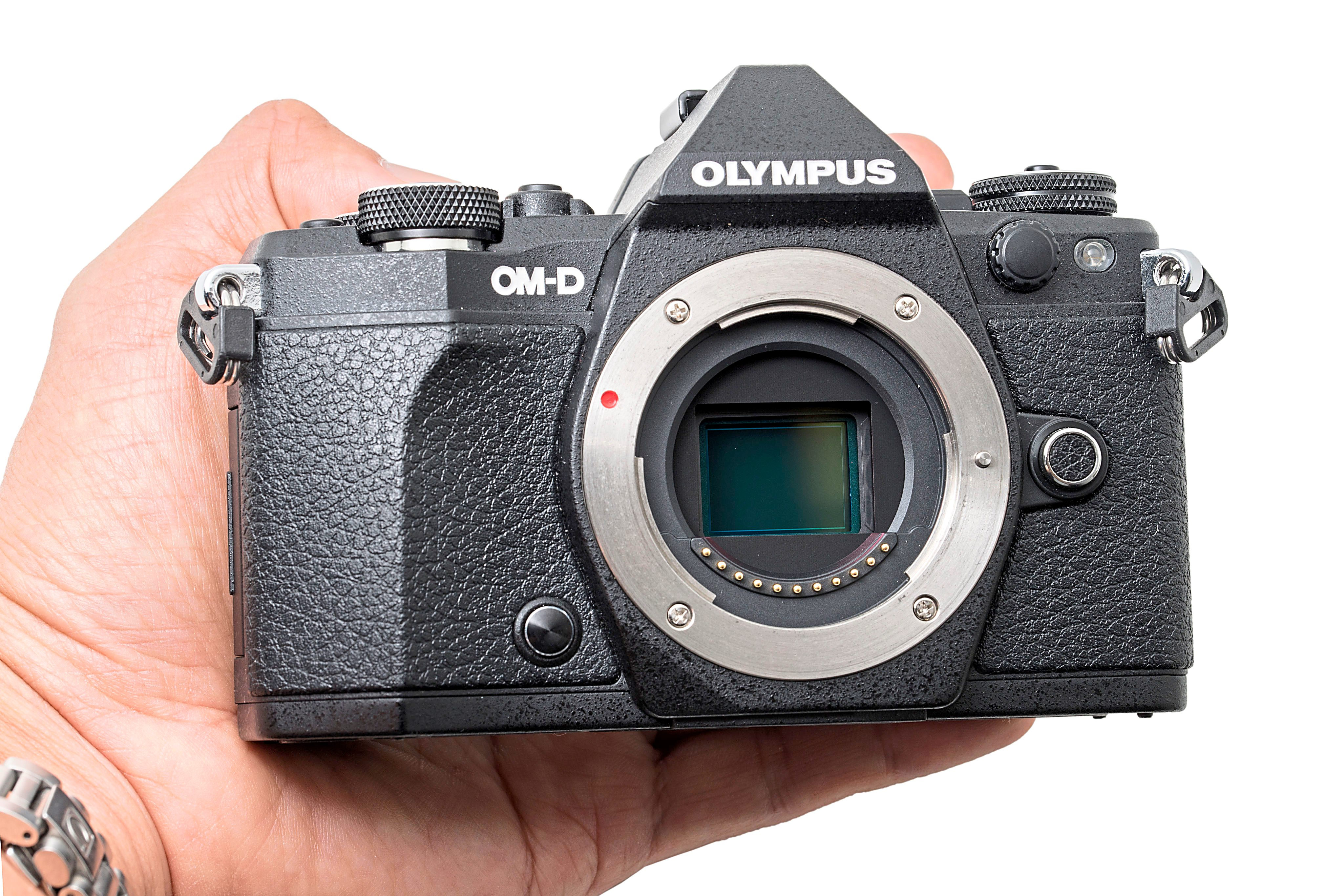 Smaill: the OM-D E-M5 Mark II fits neatly into my very small hand