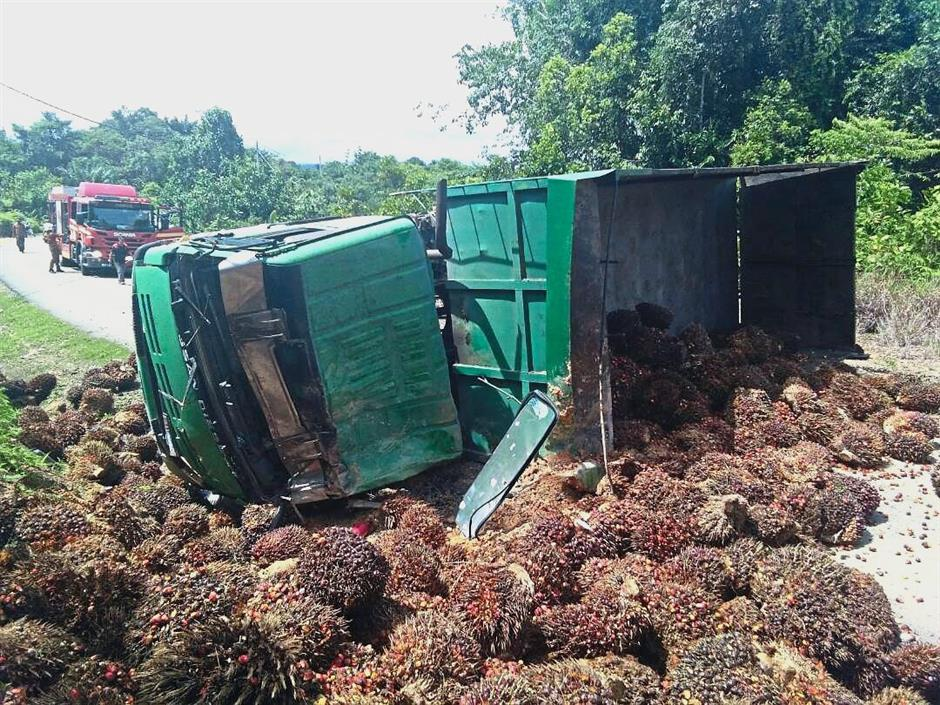 The overturned lorry ladened with oil palm fruits in Beaufort district.