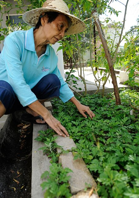 Phua Soon Boy encourages Malaysians to take up gardening and planting vegetables as a hobby as it can be fun and rewarding.