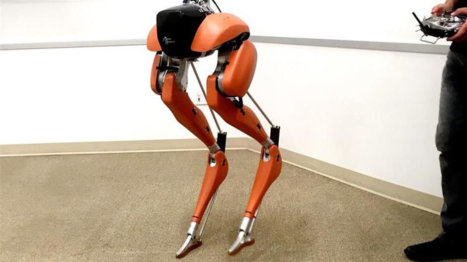 Cassie, a biped robot, can navigate un-even ground and recover from a stumble. (Mike Freeman/San Diego Union-Tribune/TNS)