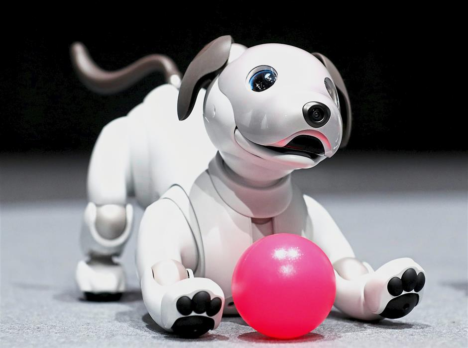 Aibo can make friends with real dogs and teach them social