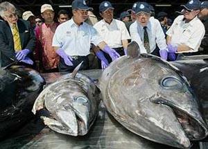 p12fish