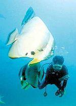 f_p21batfish