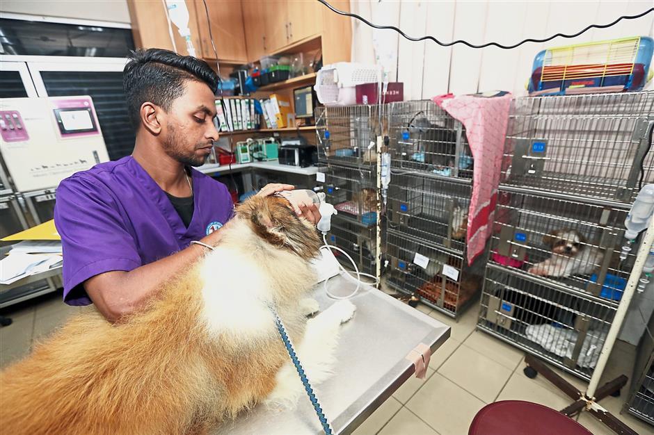 Animal doctors needed   The Star Online