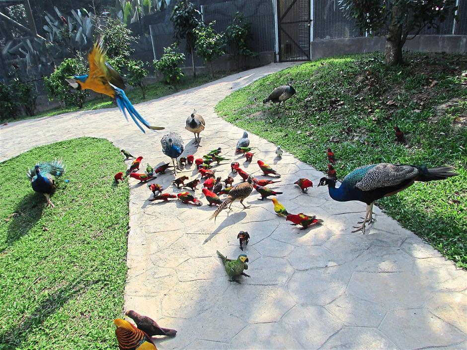 Bird Park at Ayer Keruh Melaka