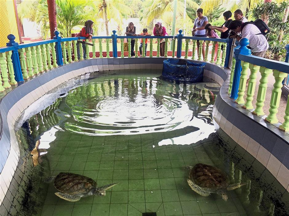 The Cherating Turtle Sanctuary, near Club Med Cherating, is home to the Leatherback Turtle, Green Turtle, Hawksbill Turtle and Olive Ridley Turtle.