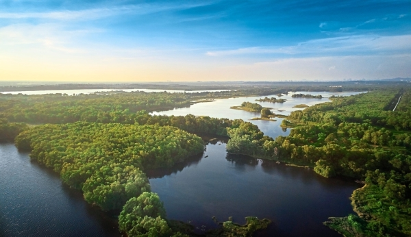 Aerial view of the Paya Indah Wetlands adjacent to Gamuda Cove. Gamuda Parks has ensured the protection of the endangered forest tree species Melicope lunu-akenda in Gamuda Cove.