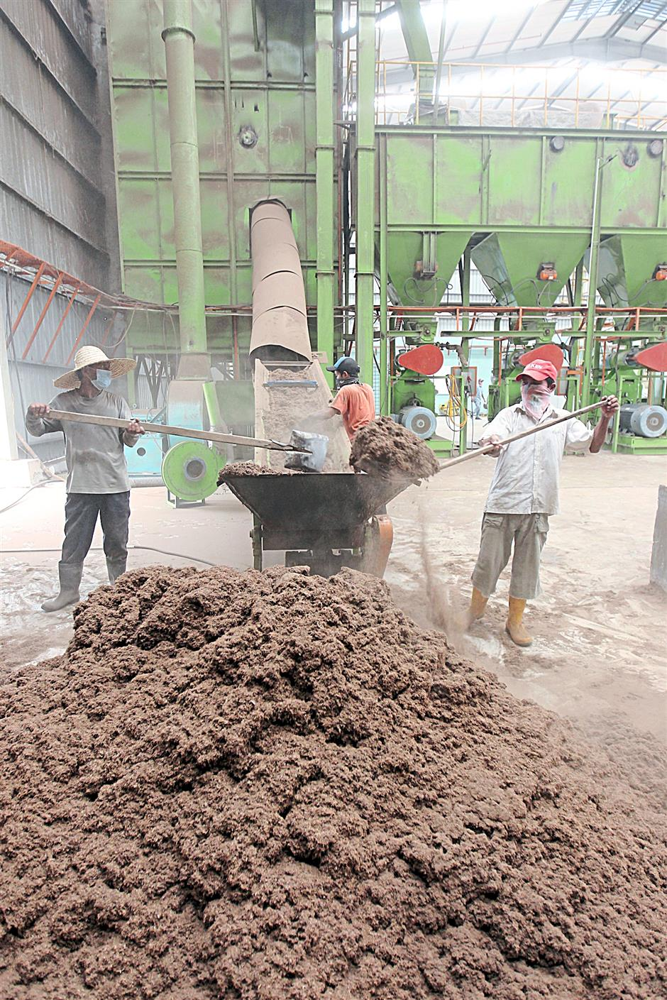 Finely shredded oil palm biomass being fed into machinery for the production of pellets.