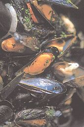 sm_10mussels4
