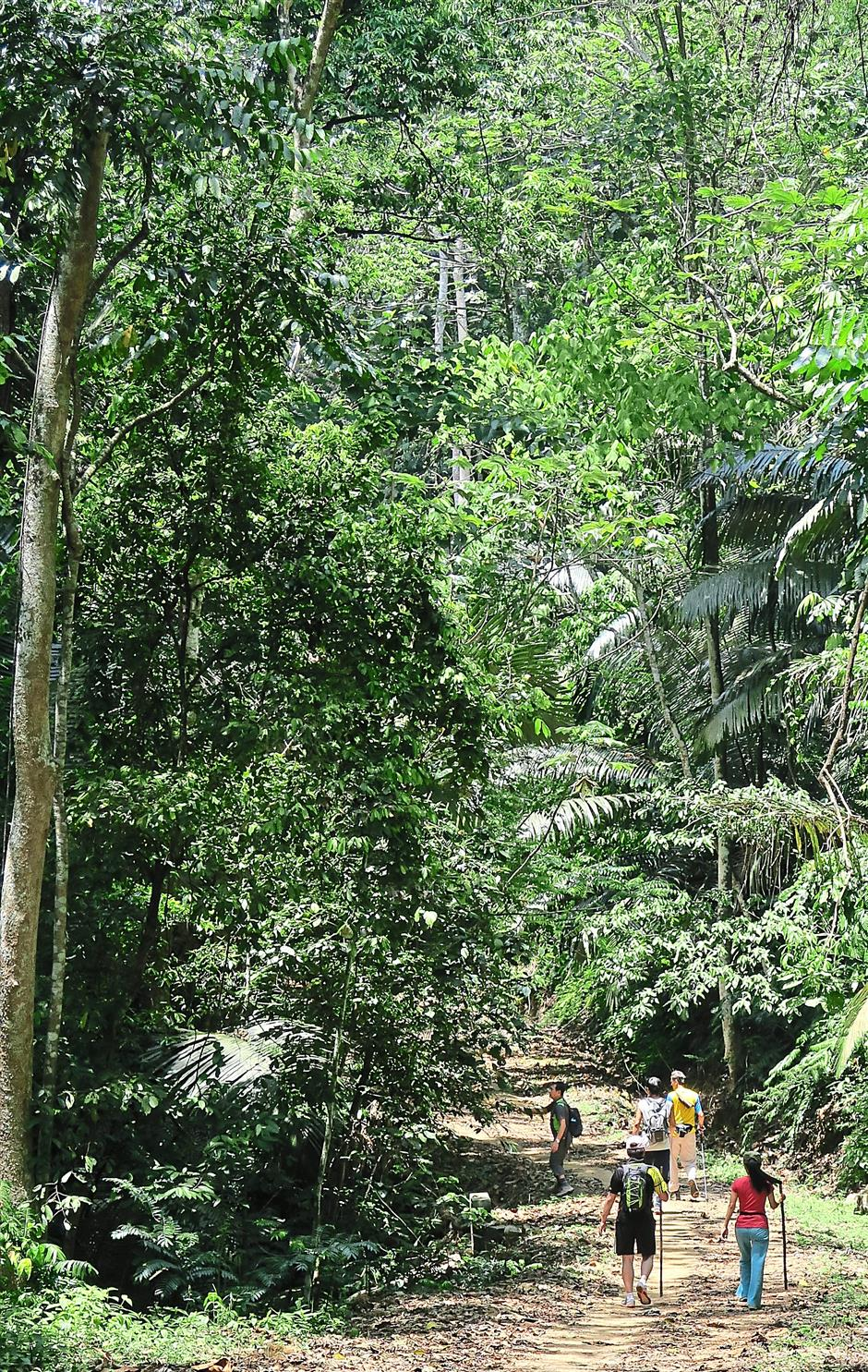 The canopy of trees lining Bukit Hari trail makes an effective shield against the sun.