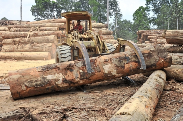 Tycoon in legal tussle over timber licences | The Star Online