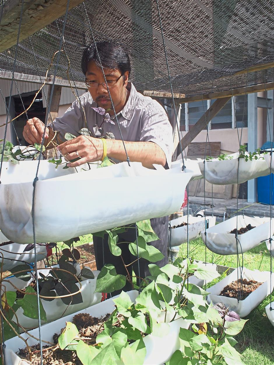 Heah checking on vegetables that are grown in the plant. He says employees are free to pick their own vegetables from the recycled trays.