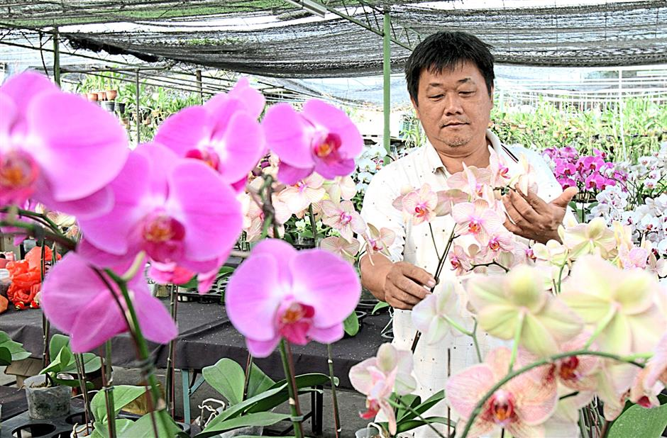 Kenson recommends using organic fertilizers for orchids.
