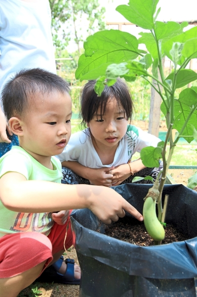 Children from the Bandar Utama 12 neighbourhood have the opportunity to learn about plants since the Kebun Kita community garden came in existence. (Left) Liang Liang, 3, Ying Ern, 7, are intrigued by the brinjal plant.
