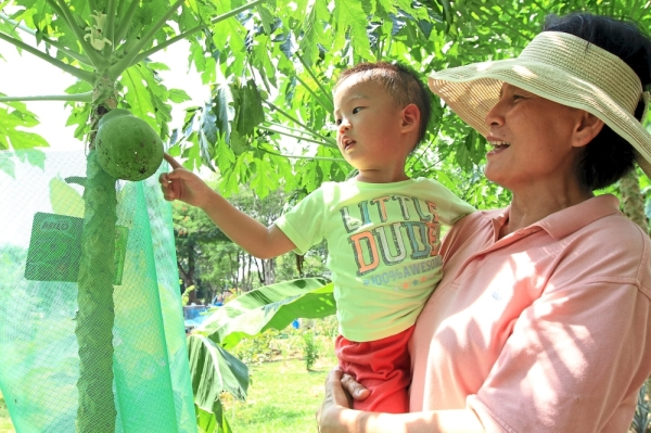 Liang Liang (left) being carried by Mandy Tan as they admire the papaya plant at the community garden.
