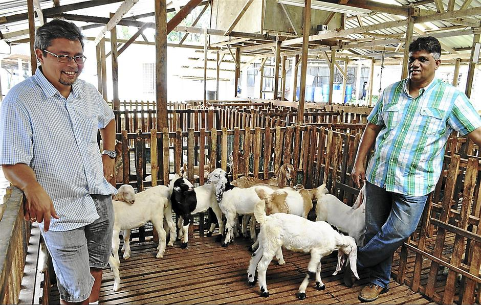 Amurthalingam Muthiah of Tomara Agro Resources (r) gets his cabritos from dairy goat farm owner Rafik Vaughan Willoughby (l).