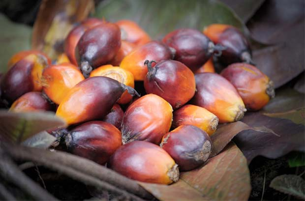 India raises import tax on palm oil to 44%, highest in a decade