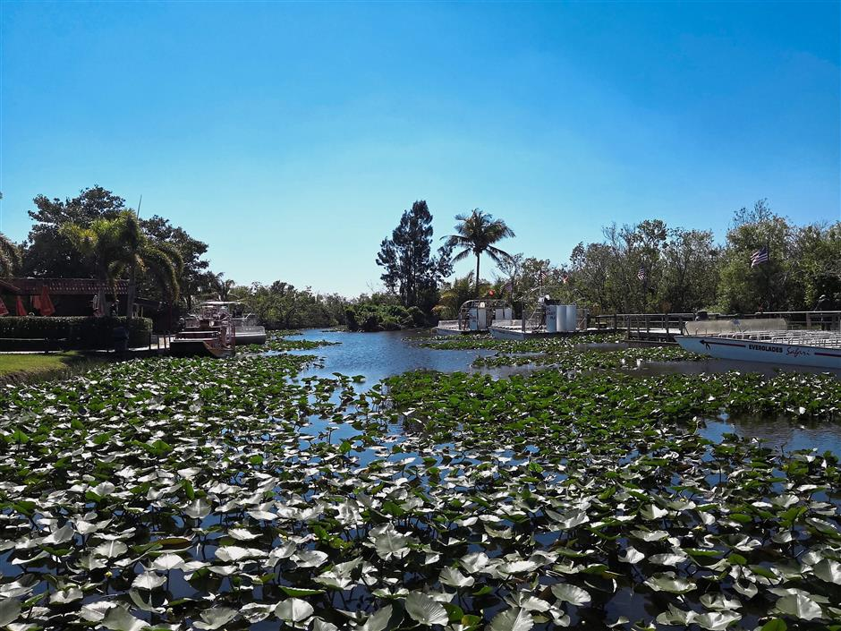 The one-day tour around Miami began at the Gator Park with an Airboat tour to see American alligators, different bird species and even softshell turtles.