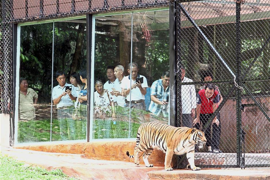 Taiping Zoo tickets now cheaper with 0% GST | The Star Online