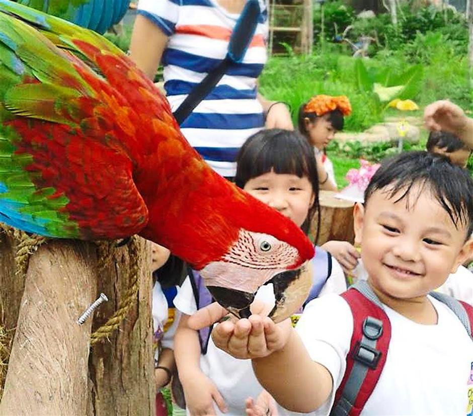 A little boy getting up close and personal with a macaw.