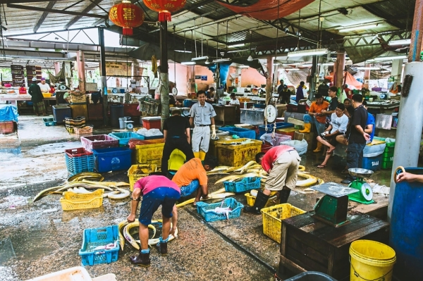 Global fishing stocks have also continued to decline. This comes as local fishermen are forced to compete with illegal dragnet fishers. - Joe Kit Yong/Team Ceritalah