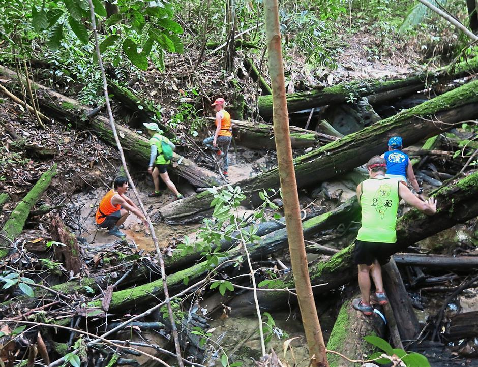 Tree falls crisscross the creek bed