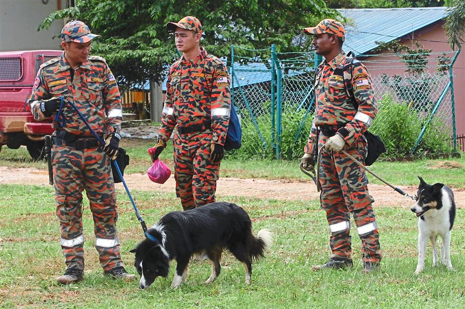 No sign nor scent: Fire and Rescue Departmentu2019s K9 unit on the ground to trace the orang asli children in the Tohoi forest reserve.