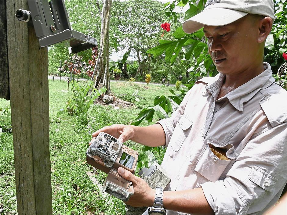 Eddie showing the camera trap to be installed with the purpose of monitoring the nesting activities of hornbills in Kinabatangan.