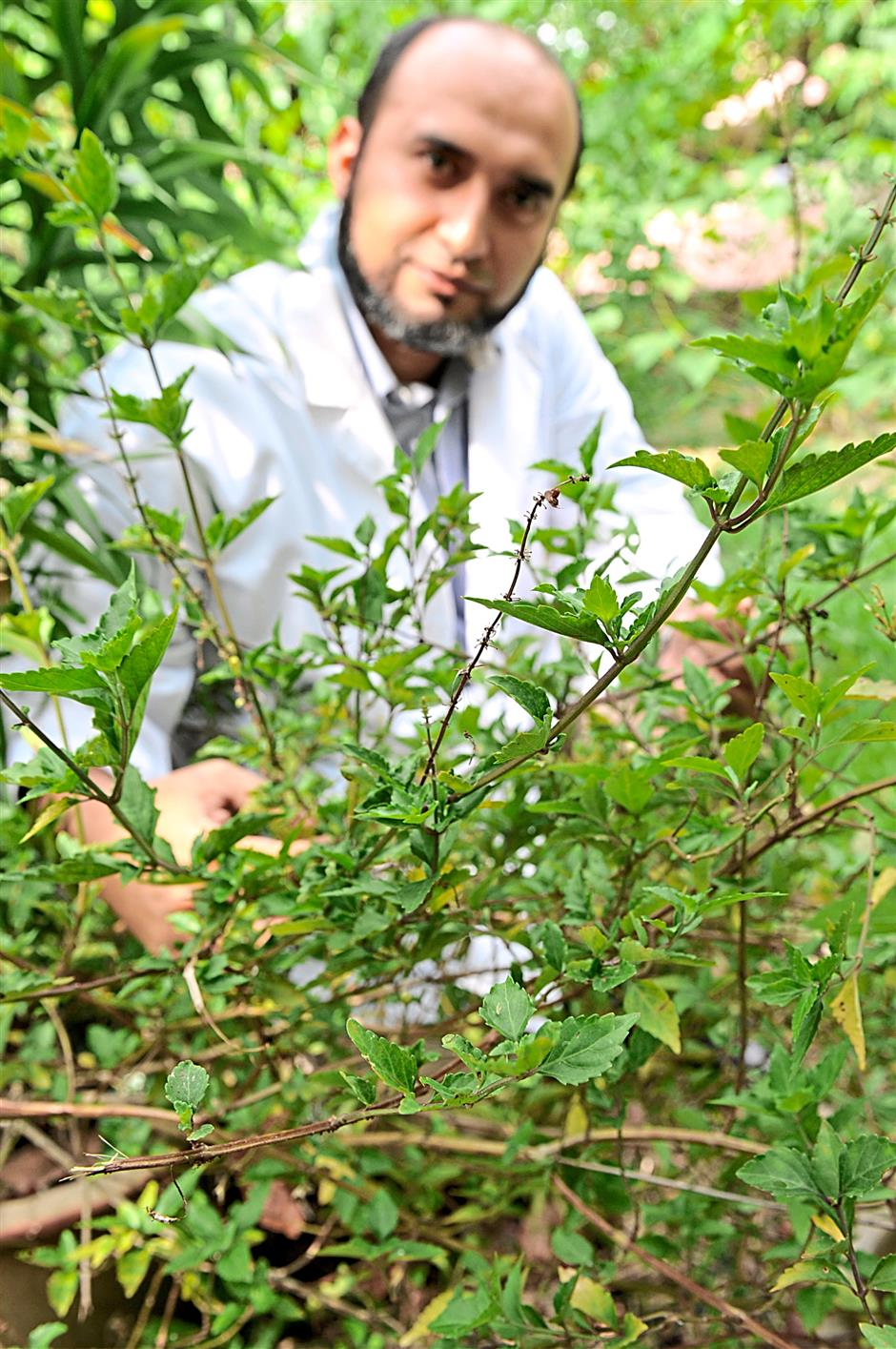 Read for the hard slog: Dr Amin Malik Shah Abdul Majid posing with misai kuching plants in a herbal garden in USM, Penang. - GARY CHEN/The Star