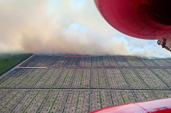 Birdu2019s eye view: The fire laying waste to crops as a fireman takes this picture from a helicopter over Kuala Baram.